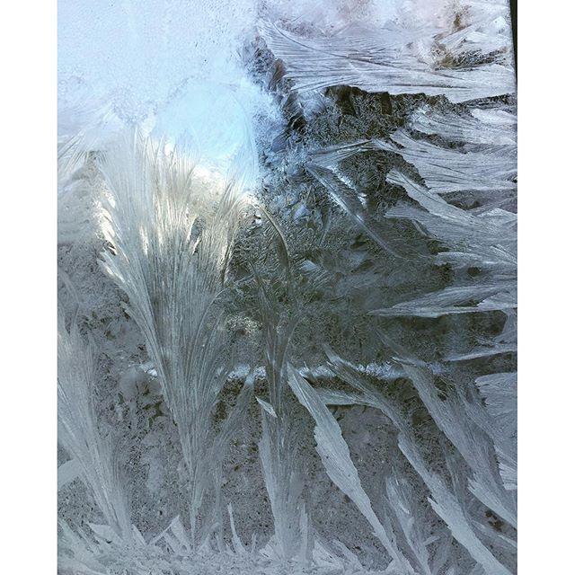Return of the frost garden #SkinnerCo