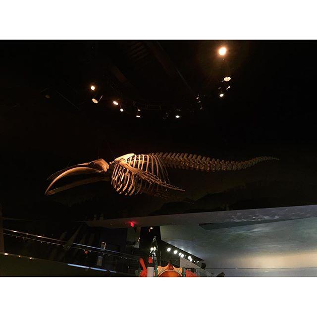 #SkinnerCo. HQ's Sky Whale