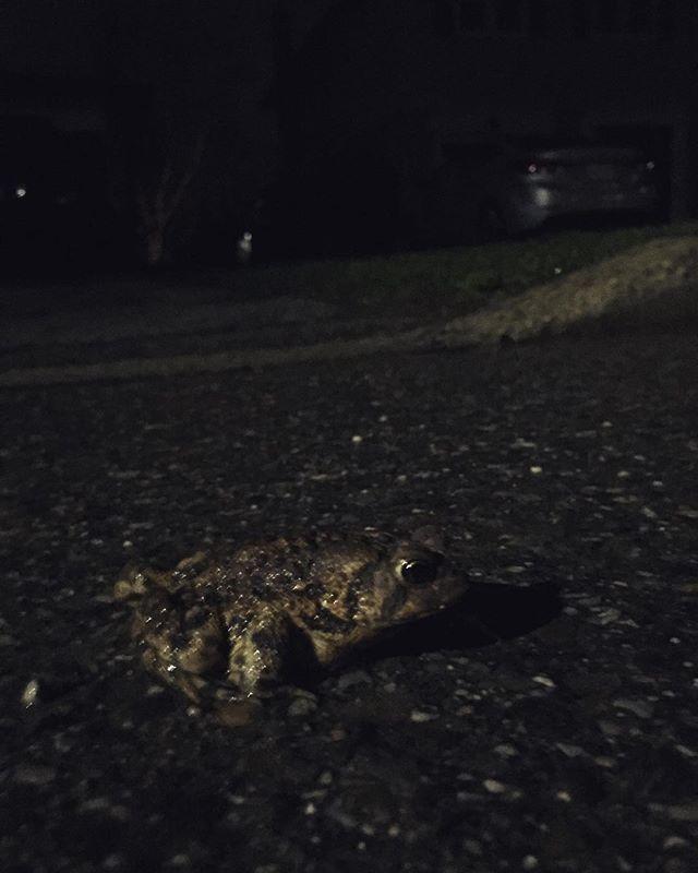 Road Toad, Camo'd (Mr. Toad's Wild Hide)