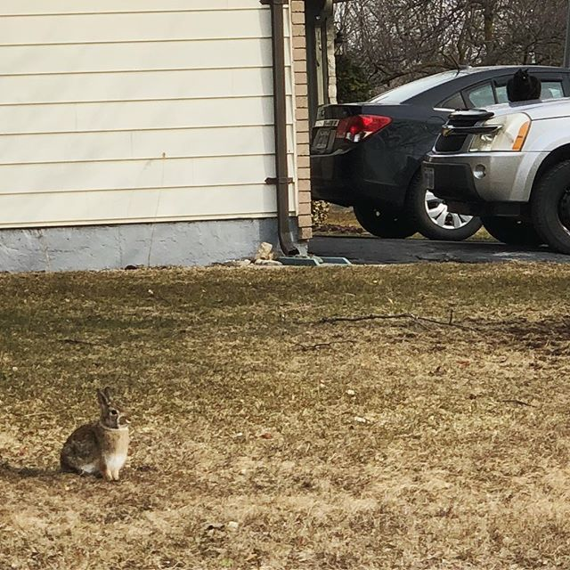 He's a bunny, she's a cat - they're cops