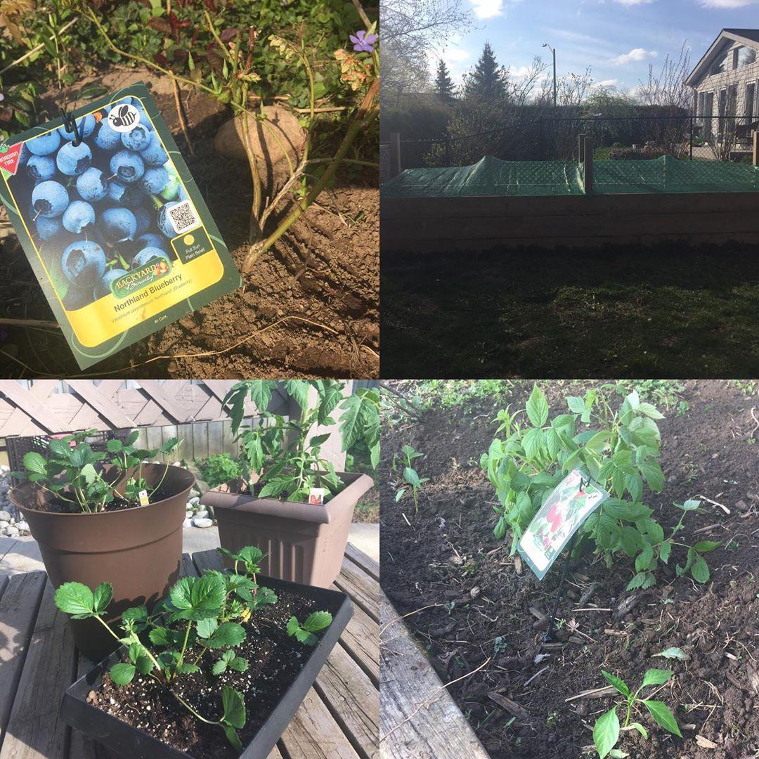 Planting is done! Weeeeee!!!! #skinnerco