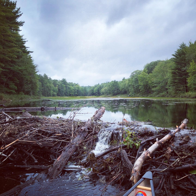 Ever climb a beaver dam?