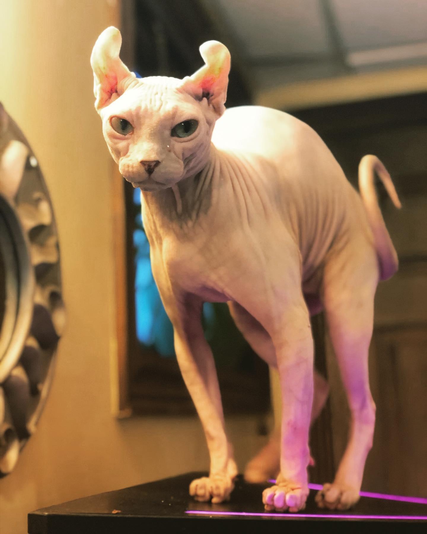 Tall cat